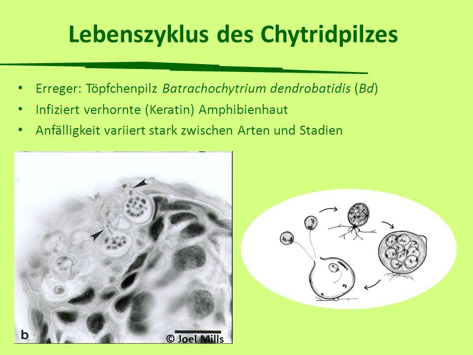 Behandlung ganzer Teiche Experiment in Mesokosmen: Infizierte Kaulquappen Libellenlarven Wasserkäfer Wasserschnecken Wasserasseln Plankton Mesokosmos