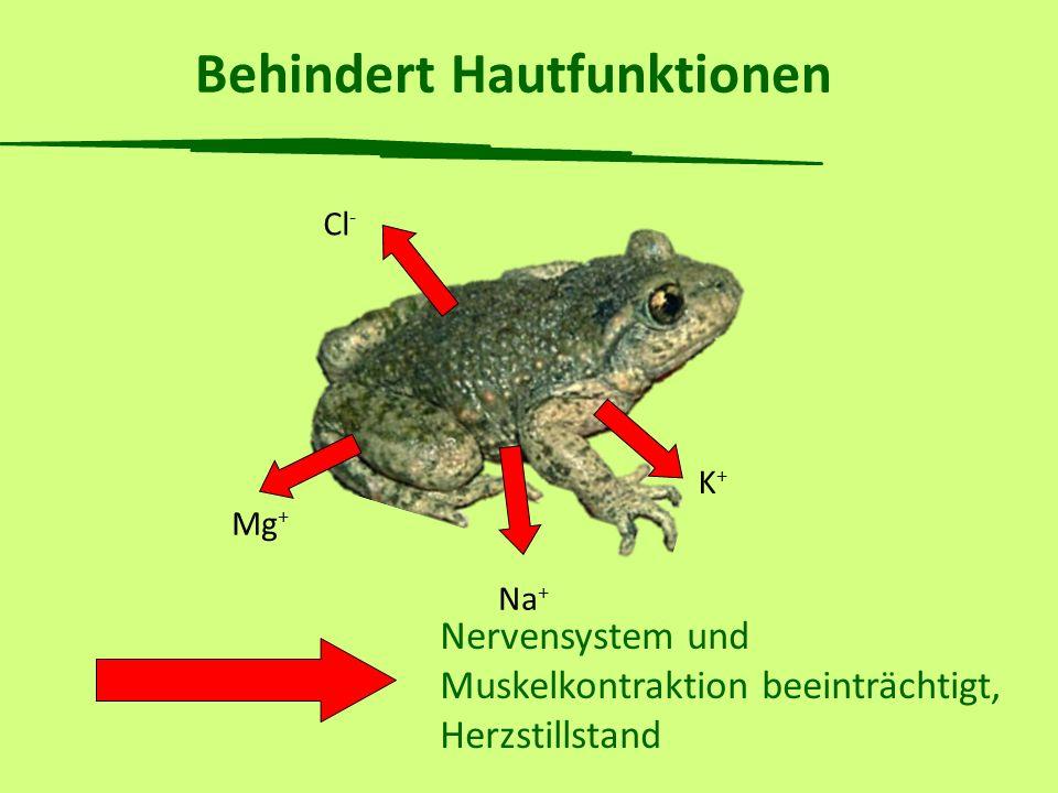 Seit wann ist der Chytridpilz in der Schweiz.