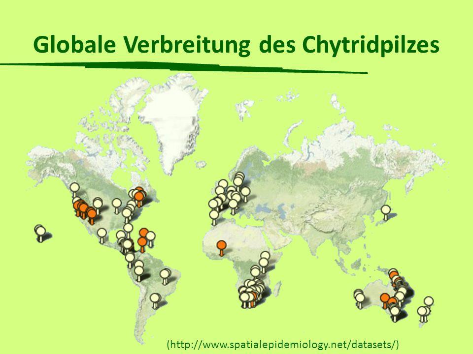 Chytridiomykose und das globale Amphibiensterben (Stuart et al. 2004) Chytridiomykose