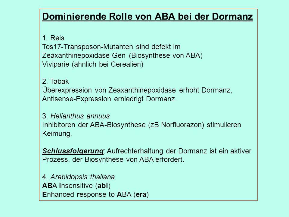Dominierende Rolle von ABA bei der Dormanz 1.