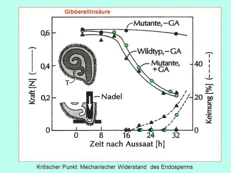 Kritischer Punkt: Mechanischer Widerstand des Endosperms