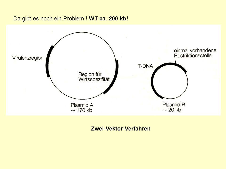 Da gibt es noch ein Problem ! WT ca. 200 kb! Zwei-Vektor-Verfahren