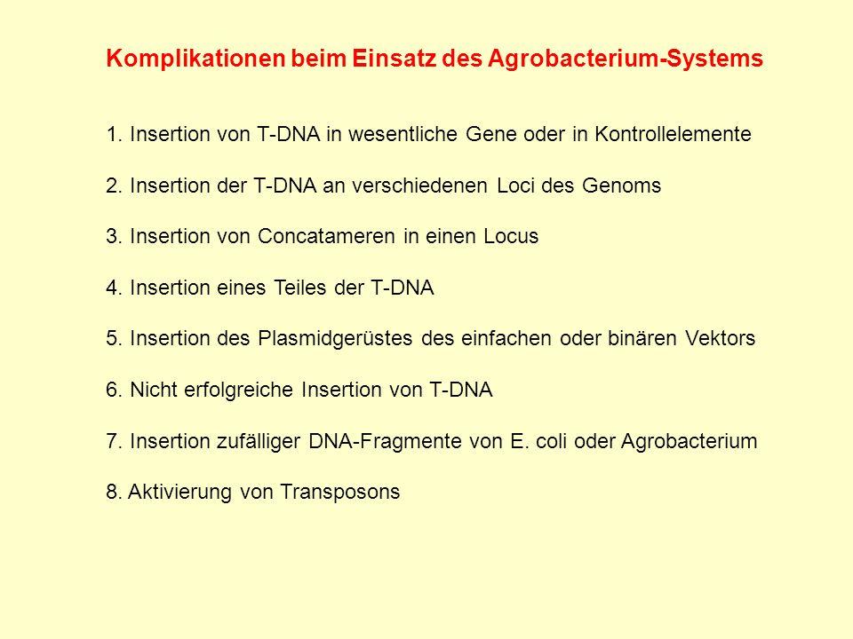 Komplikationen beim Einsatz des Agrobacterium-Systems 1. Insertion von T-DNA in wesentliche Gene oder in Kontrollelemente 2. Insertion der T-DNA an ve