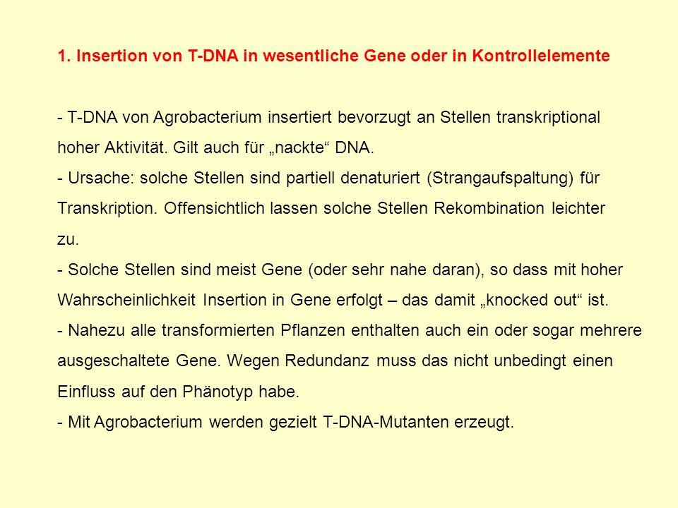 1. Insertion von T-DNA in wesentliche Gene oder in Kontrollelemente - T-DNA von Agrobacterium insertiert bevorzugt an Stellen transkriptional hoher Ak