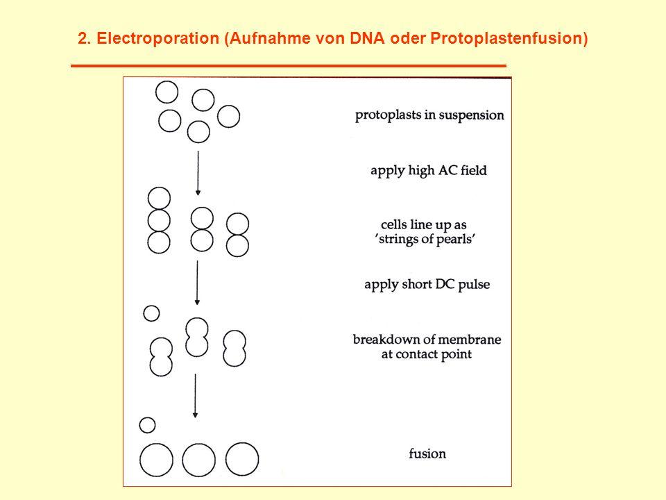 2. Electroporation (Aufnahme von DNA oder Protoplastenfusion)