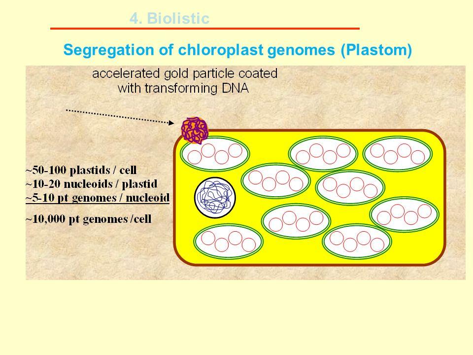 Segregation of chloroplast genomes (Plastom) 4. Biolistic