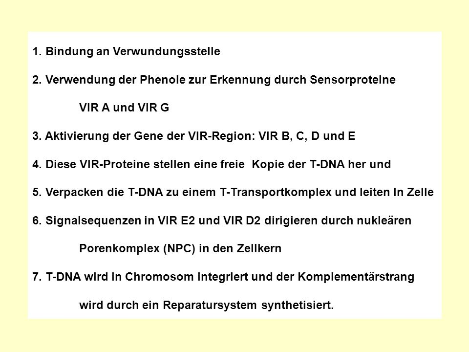 1. Bindung an Verwundungsstelle 2. Verwendung der Phenole zur Erkennung durch Sensorproteine VIR A und VIR G 3. Aktivierung der Gene der VIR-Region: V