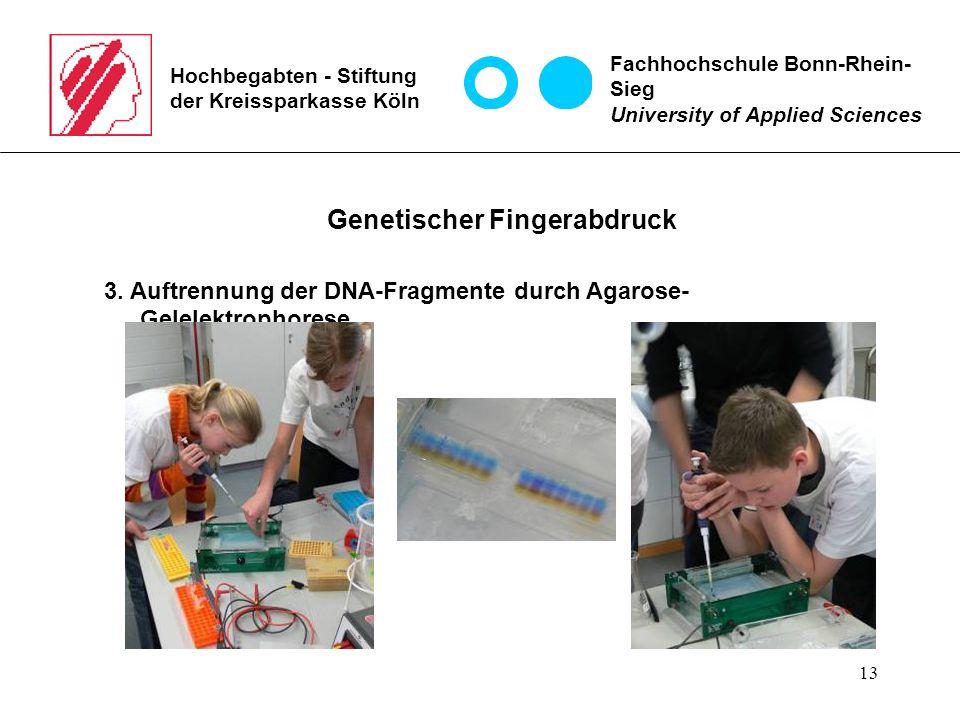 13 Hochbegabten - Stiftung der Kreissparkasse Köln Fachhochschule Bonn-Rhein- Sieg University of Applied Sciences Genetischer Fingerabdruck 3.