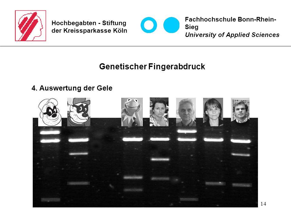14 Hochbegabten - Stiftung der Kreissparkasse Köln Fachhochschule Bonn-Rhein- Sieg University of Applied Sciences Genetischer Fingerabdruck 4.