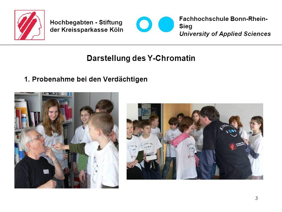 3 Hochbegabten - Stiftung der Kreissparkasse Köln Darstellung des Y-Chromatin 1.