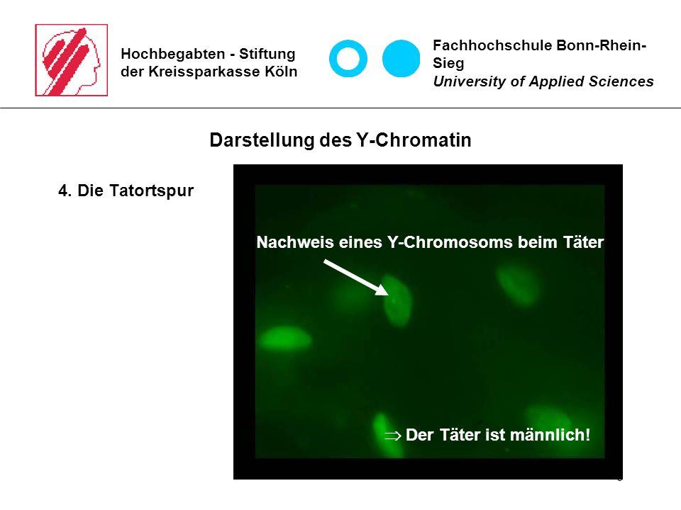 6 Hochbegabten - Stiftung der Kreissparkasse Köln Darstellung des Y-Chromatin 4.