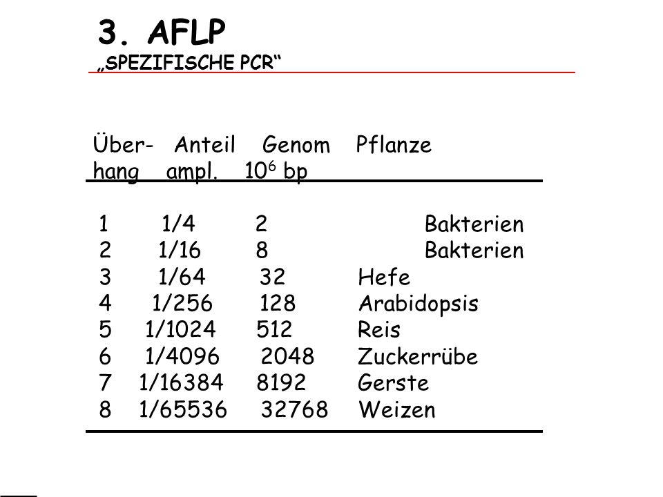3. AFLP SPEZIFISCHE PCR Über- Anteil Genom Pflanze hang ampl. 10 6 bp 1 1/4 2 Bakterien 2 1/16 8 Bakterien 3 1/64 32 Hefe 4 1/256 128 Arabidopsis 5 1/