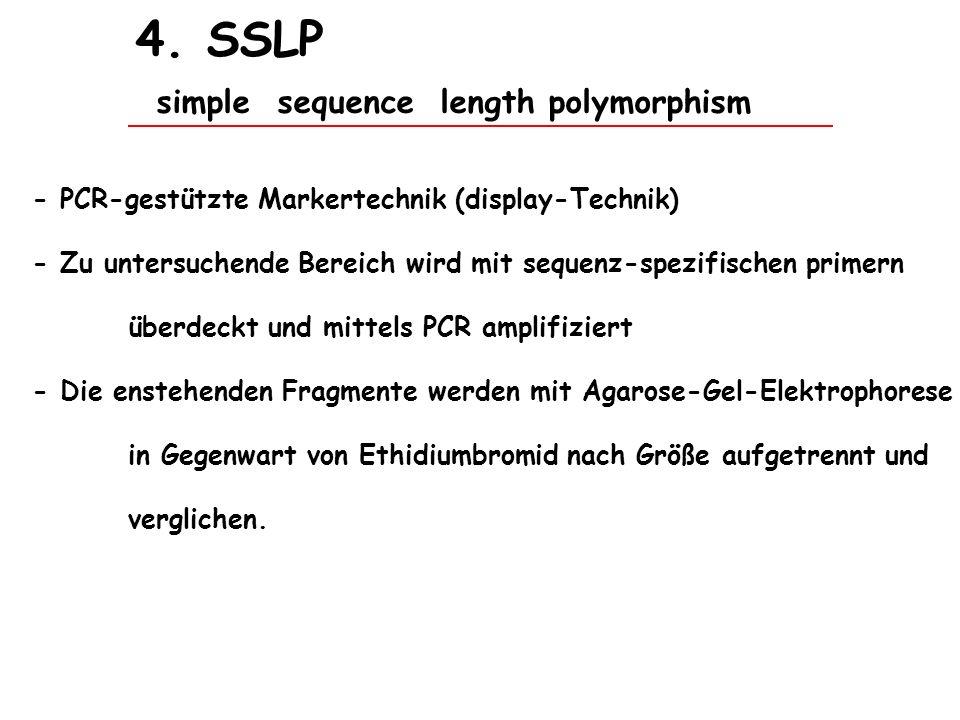 4. SSLP simple sequence length polymorphism - PCR-gestützte Markertechnik (display-Technik) - Zu untersuchende Bereich wird mit sequenz-spezifischen p