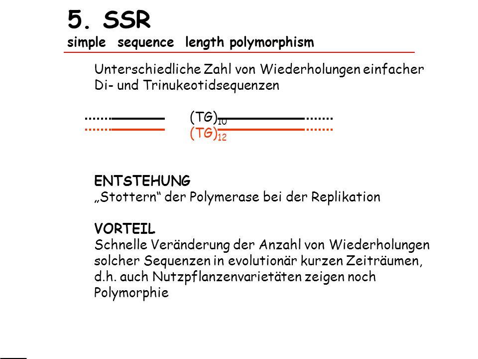 5. SSR simple sequence length polymorphism Unterschiedliche Zahl von Wiederholungen einfacher Di- und Trinukeotidsequenzen (TG) 10 (TG) 12 ENTSTEHUNG