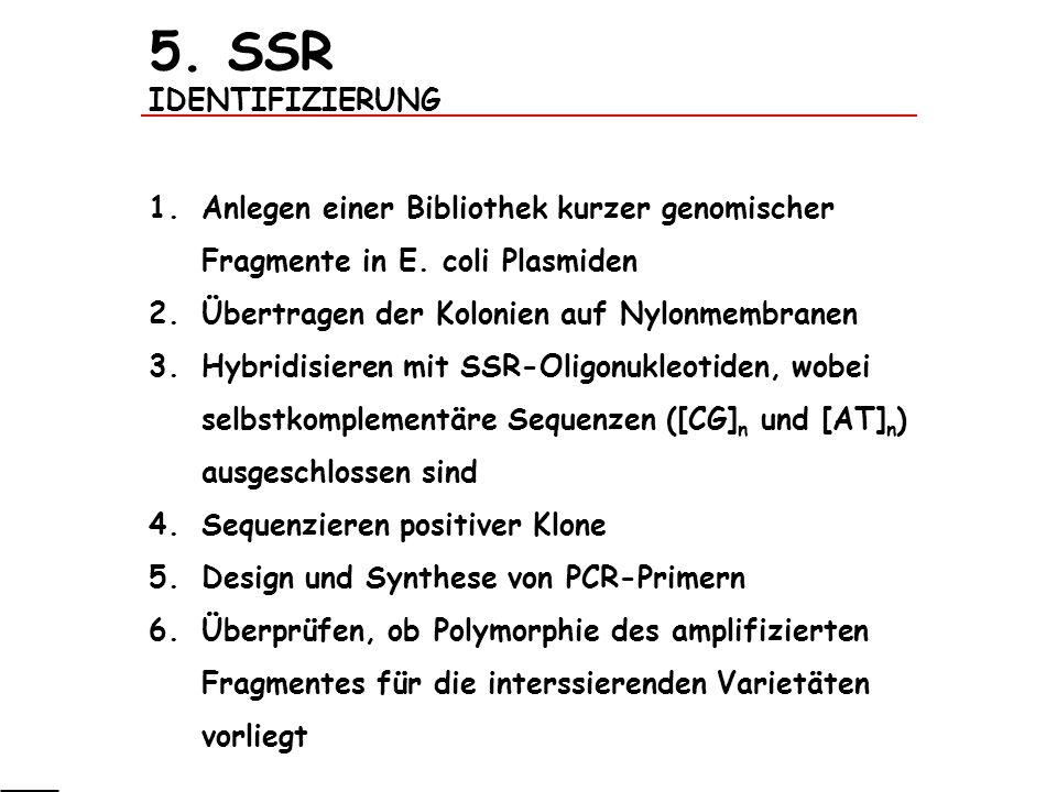 5. SSR IDENTIFIZIERUNG 1.Anlegen einer Bibliothek kurzer genomischer Fragmente in E. coli Plasmiden 2.Übertragen der Kolonien auf Nylonmembranen 3.Hyb