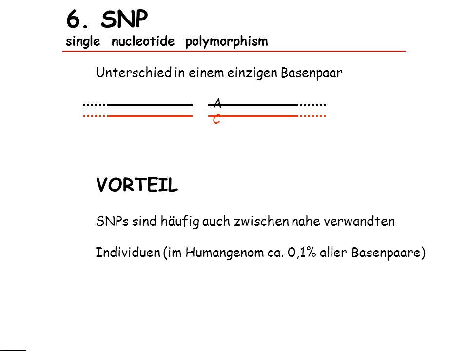 6. SNP single nucleotide polymorphism Unterschied in einem einzigen Basenpaar A C VORTEIL SNPs sind häufig auch zwischen nahe verwandten Individuen (i