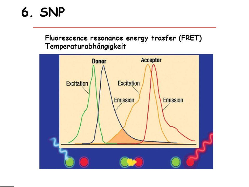 6. SNP Fluorescence resonance energy trasfer (FRET) Temperaturabhängigkeit