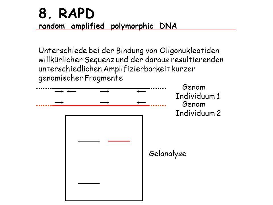 8. RAPD random amplified polymorphic DNA Unterschiede bei der Bindung von Oligonukleotiden willkürlicher Sequenz und der daraus resultierenden untersc