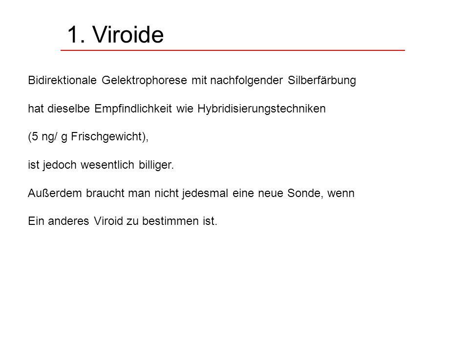 1. Viroide Bidirektionale Gelektrophorese mit nachfolgender Silberfärbung hat dieselbe Empfindlichkeit wie Hybridisierungstechniken (5 ng/ g Frischgew