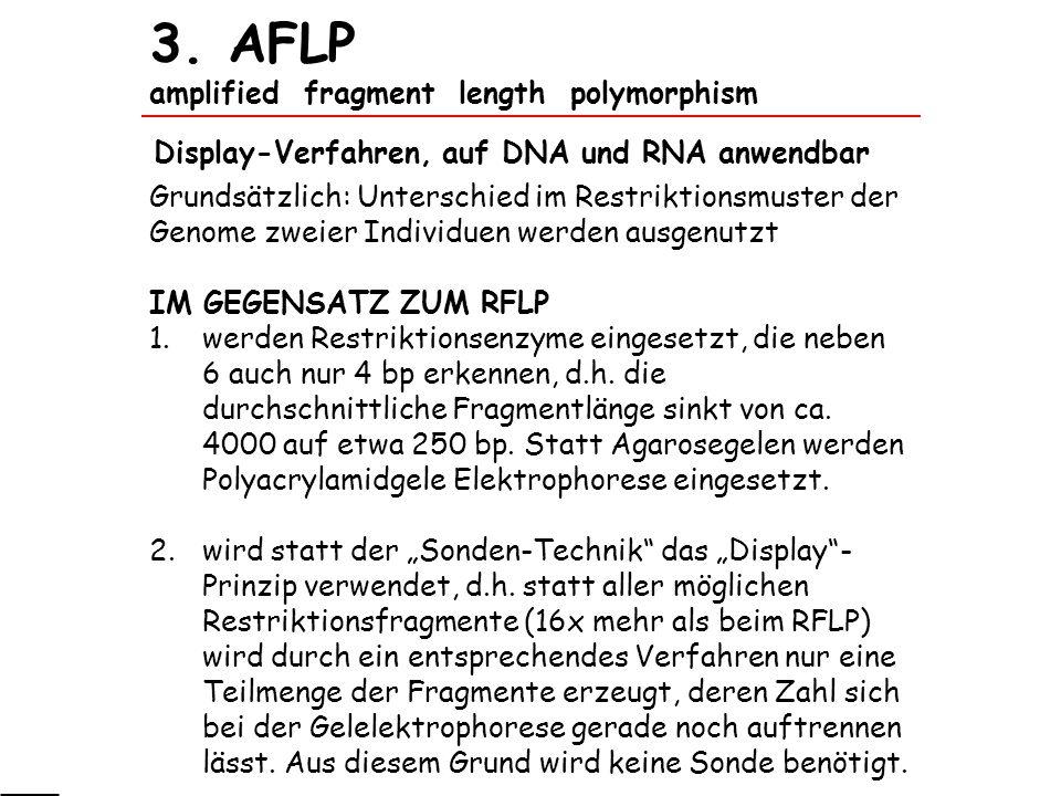 3. AFLP amplified fragment length polymorphism Grundsätzlich: Unterschied im Restriktionsmuster der Genome zweier Individuen werden ausgenutzt IM GEGE