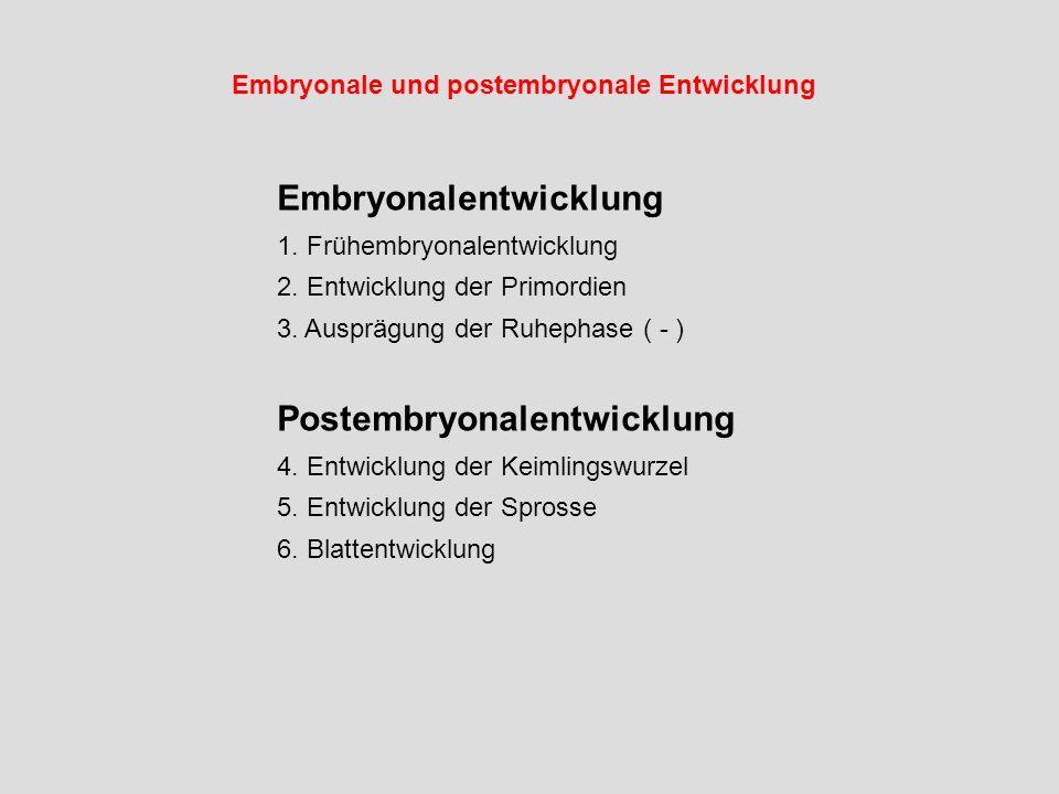 Embryonale und postembryonale Entwicklung Embryonalentwicklung 1. Frühembryonalentwicklung 2. Entwicklung der Primordien 3. Ausprägung der Ruhephase (
