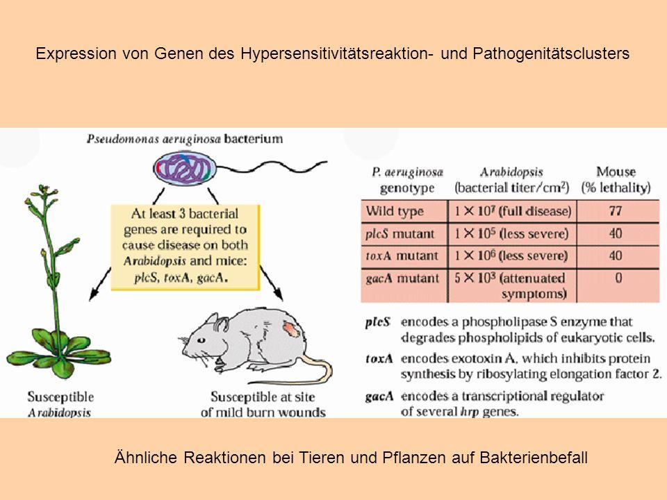 Expression von Genen des Hypersensitivitätsreaktion- und Pathogenitätsclusters Ähnliche Reaktionen bei Tieren und Pflanzen auf Bakterienbefall