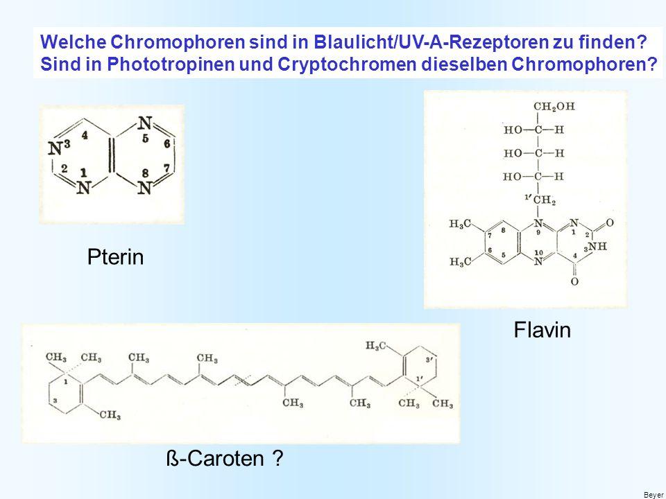 Welche Chromophoren sind in Blaulicht/UV-A-Rezeptoren zu finden? Sind in Phototropinen und Cryptochromen dieselben Chromophoren? Beyer Pterin Flavin ß