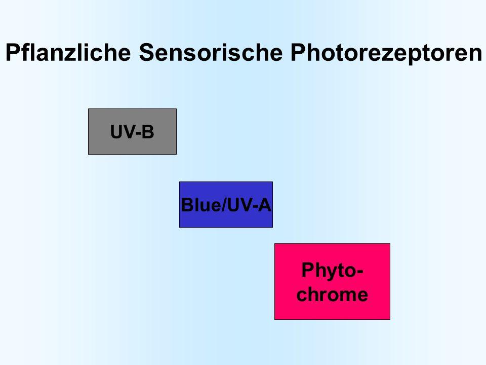 UV-B Blue/UV-A Phyto- chrome Pflanzliche Sensorische Photorezeptoren