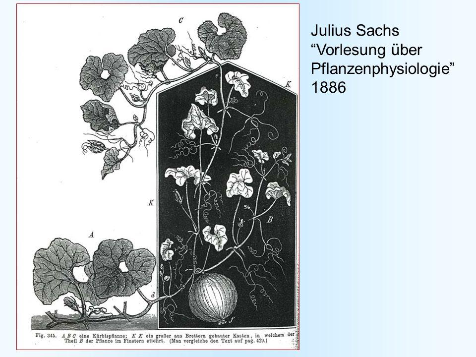 Photorezeptoren in Arabidopsis Phytochrome A - E Cryptochrome 1 und 2 Phototropin 1 und 2 (Photolyase) 1.