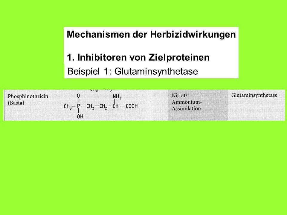 Beispiel 1: Glutaminsynthetase Mechanismen der Herbizidwirkungen 1.Inhibitoren von Zielproteinen