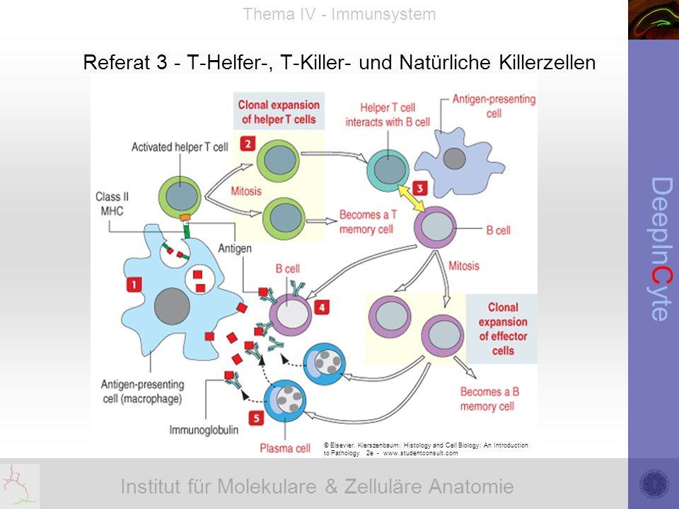 Institut für Molekulare & Zelluläre Anatomie DeepInCyte Thema IV - Immunsystem Referat 3 - T-Helfer-, T-Killer- und Natürliche Killerzellen © Elsevier.