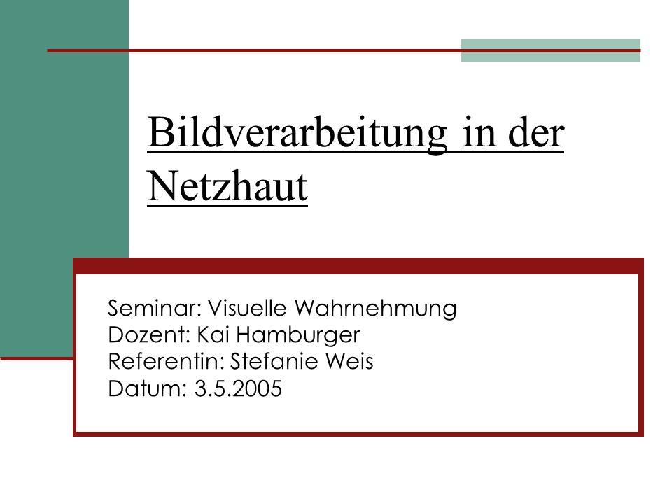 Bildverarbeitung in der Netzhaut Seminar: Visuelle Wahrnehmung Dozent: Kai Hamburger Referentin: Stefanie Weis Datum: 3.5.2005