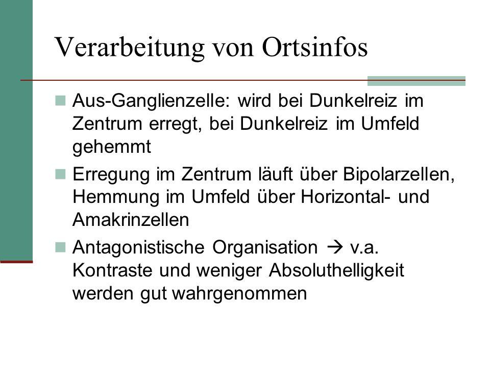 Verarbeitung von Ortsinfos Aus-Ganglienzelle: wird bei Dunkelreiz im Zentrum erregt, bei Dunkelreiz im Umfeld gehemmt Erregung im Zentrum läuft über B
