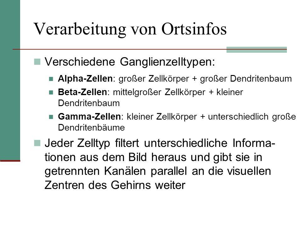 Verarbeitung von Ortsinfos Verschiedene Ganglienzelltypen: Alpha-Zellen: großer Zellkörper + großer Dendritenbaum Beta-Zellen: mittelgroßer Zellkörper