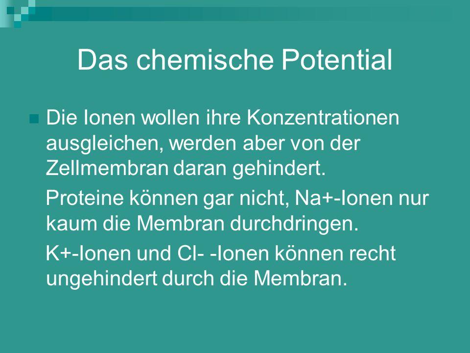 Das chemische Potential Die Ionen wollen ihre Konzentrationen ausgleichen, werden aber von der Zellmembran daran gehindert. Proteine können gar nicht,