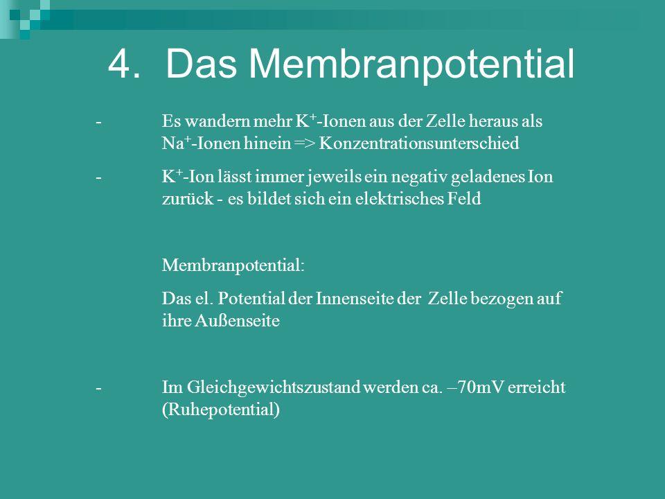 4. Das Membranpotential - Es wandern mehr K + -Ionen aus der Zelle heraus als Na + -Ionen hinein => Konzentrationsunterschied - K + -Ion lässt immer j
