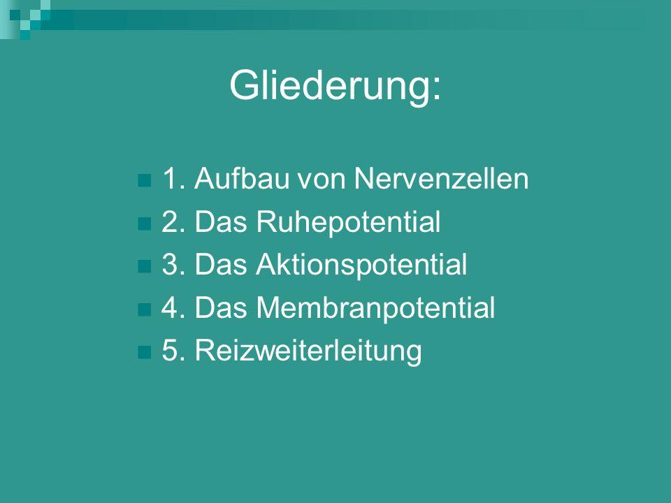 Gliederung: 1. Aufbau von Nervenzellen 2. Das Ruhepotential 3. Das Aktionspotential 4. Das Membranpotential 5. Reizweiterleitung