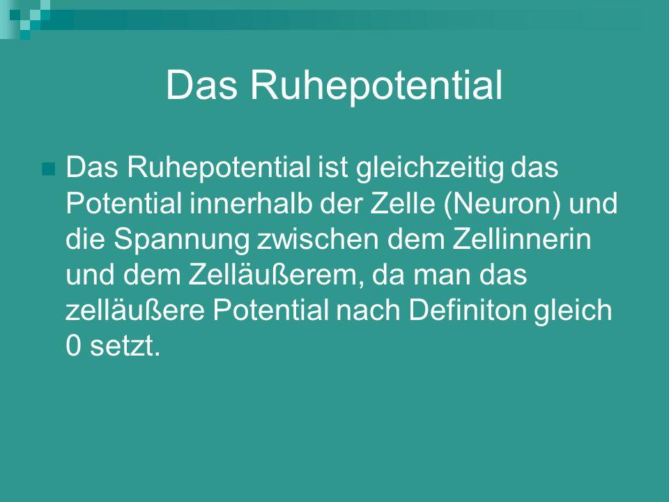 Das Ruhepotential Das Ruhepotential ist gleichzeitig das Potential innerhalb der Zelle (Neuron) und die Spannung zwischen dem Zellinnerin und dem Zell
