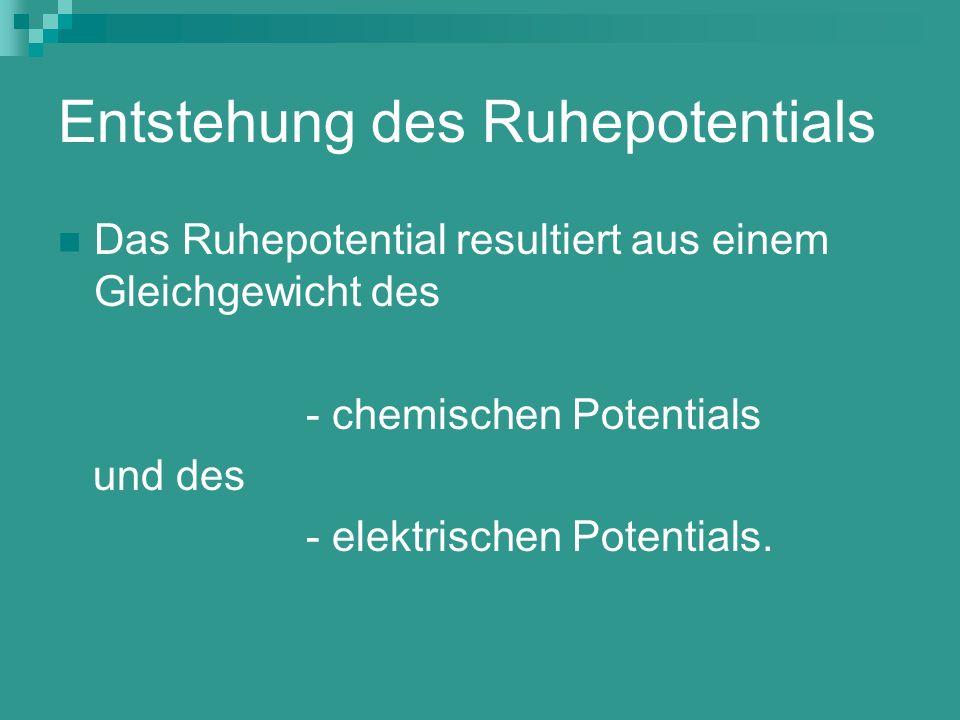 Entstehung des Ruhepotentials Das Ruhepotential resultiert aus einem Gleichgewicht des - chemischen Potentials und des - elektrischen Potentials.