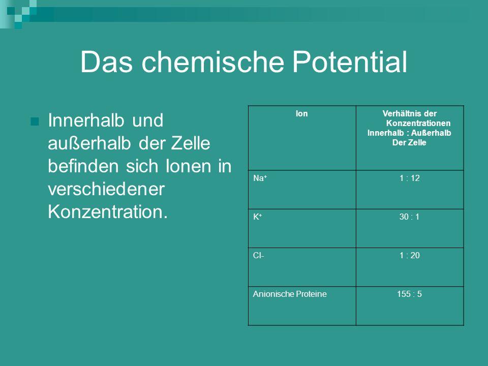 Veränderung des Membranpotentials - Durch eine Reizung der Nervenzelle wird das Membranpotential verändert - Wird dabei ein gewisser Schwellenwert (-50mV) überschritten, so öffnen sich in der Membran Transportkanäle für Na + -Ionen => Na + -Ionen strömen in die Zelle (Polarisationsumkehr) - Kurzzeitiger Anstieg des Membranpotentials auf 40mV (Aktionspotential) Depolarisation - Die K + -Ionen reagieren erst 1ms später und stellen mit dem Ausströmen von K + -Ionen das Ruhepotential wieder her Repolarisation