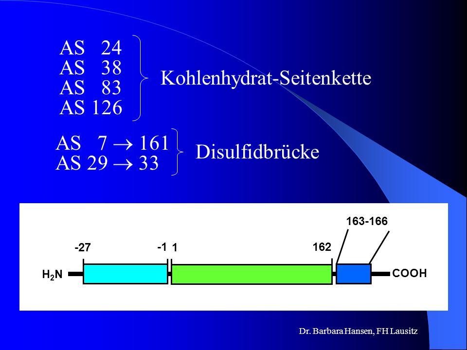 Dr. Barbara Hansen, FH Lausitz Wie sieht Erythropoetin aus? Glycoprotein 34 kDa 193 Aminosäuren vor der Sekretion innerhalb der Zellen 166 Aminosäuren
