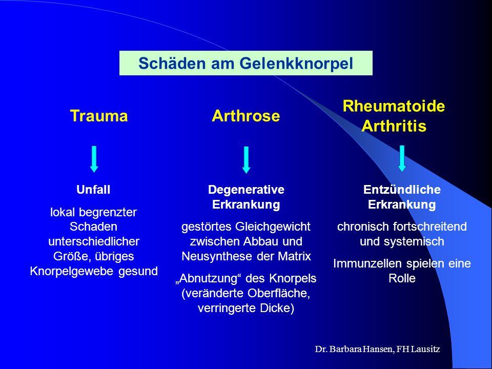 Dr. Barbara Hansen, FH Lausitz Ein Blick ins Knie Kreuzband Meniskus Gelenkknorpel