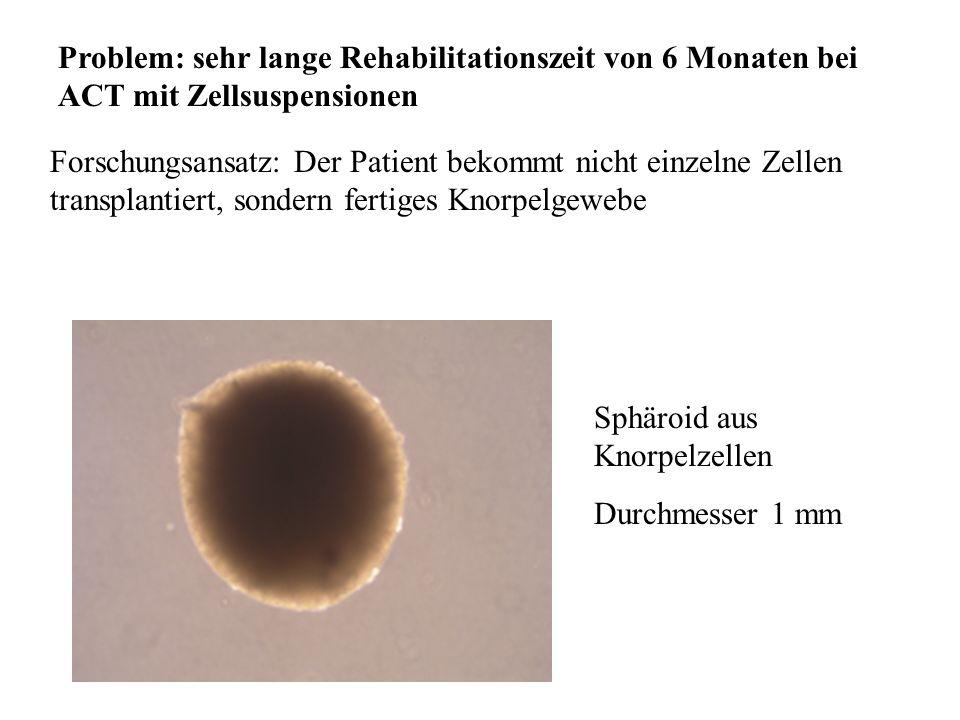 Dr. Barbara Hansen, FH Lausitz 3-dimensionales in vitro Gewebe dritte Generation der zellbasierten Arzneimittel ohne Verwendung von Trägergerüsten N E