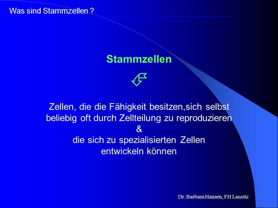 Dr. Barbara Hansen, FH Lausitz Was sind Stammzellen und warum sind sie so wichtig? Was sind die Unterschiede zwischen verschiedenen Stammzellen? Wie w