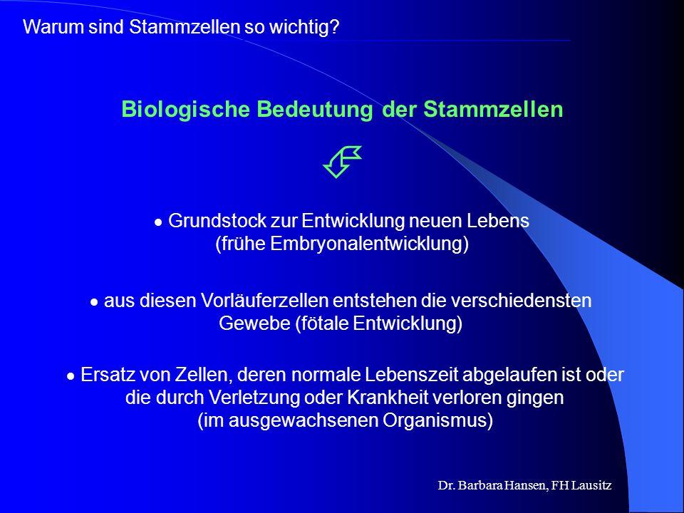 Dr. Barbara Hansen, FH Lausitz Zellen, die die Fähigkeit besitzen,sich selbst beliebig oft durch Zellteilung zu reproduzieren & die sich zu spezialisi