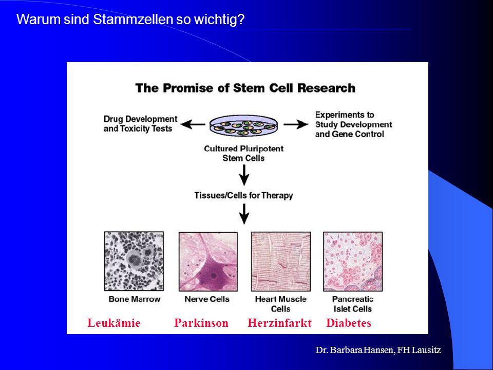 Dr. Barbara Hansen, FH Lausitz Warum sind Stammzellen so wichtig? Biologische Bedeutung der Stammzellen aus diesen Vorläuferzellen entstehen die versc