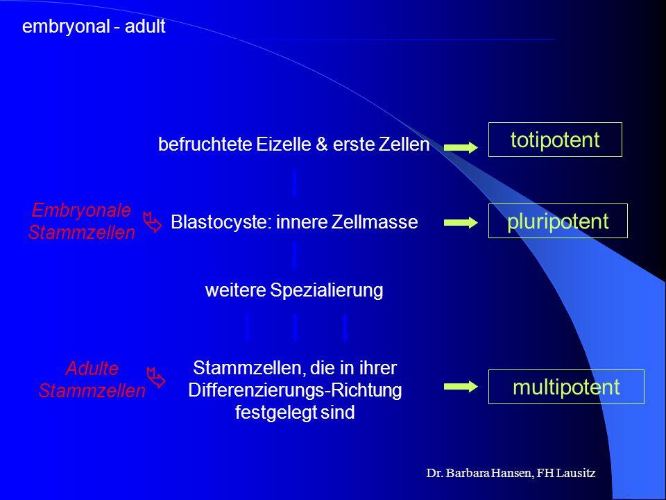 Dr. Barbara Hansen, FH Lausitz Warum sind Stammzellen so wichtig? Leukämie Parkinson Herzinfarkt Diabetes