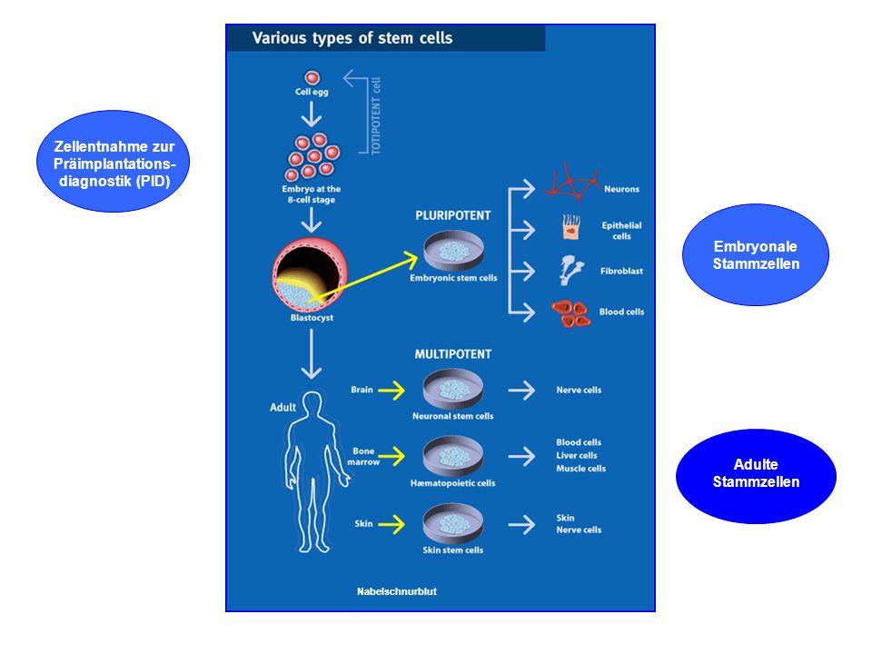 Dr. Barbara Hansen, FH Lausitz embryonal - adult multipotent pluripotent Blastocyste: innere Zellmasse befruchtete Eizelle & erste Zellen totipotent w