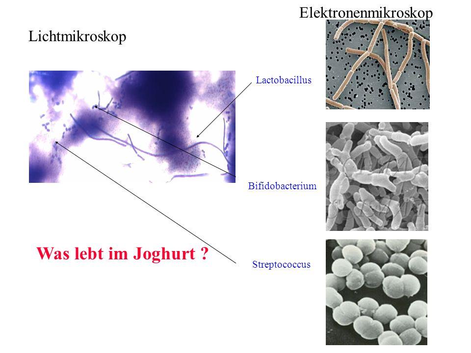 Dr.Barbara Hansen, FH Lausitz Warum sind Stammzellen so wichtig.