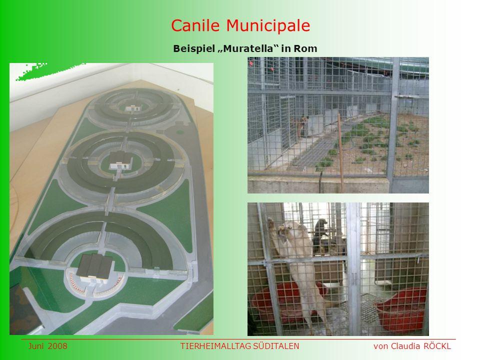 Canile Municipale Beispiel Muratella in Rom Juni 2008 von Claudia RÖCKLTIERHEIMALLTAG SÜDITALEN